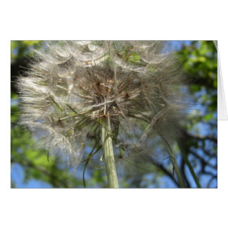 Up in the Sky Salsify Card