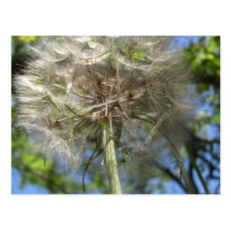 Up in the Sky Salsify Notes Card