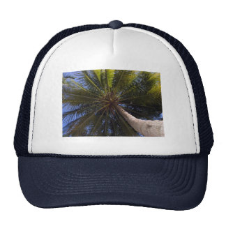 up the coconut tree trucker hat