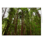 Up to Redwoods at Muir Woods National Monument Card