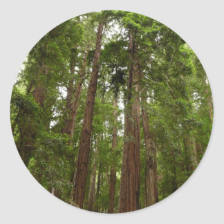 Up to Redwoods at Muir Woods National Monument Classic Round Sticker