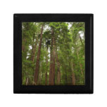Up to Redwoods at Muir Woods National Monument Keepsake Box