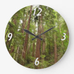 Up to Redwoods at Muir Woods National Monument Large Clock