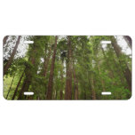 Up to Redwoods at Muir Woods National Monument License Plate