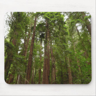 Up to Redwoods at Muir Woods National Monument Mouse Pad