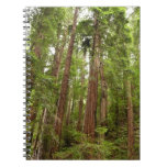 Up to Redwoods at Muir Woods National Monument Spiral Notebook