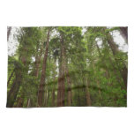 Up to Redwoods at Muir Woods National Monument Towel