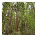 Up to Redwoods at Muir Woods National Monument Trivet
