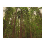 Up to Redwoods at Muir Woods National Monument Wood Wall Decor