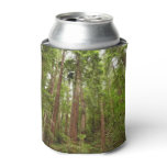 Up to Redwoods I Can Cooler