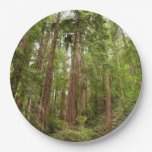 Up to Redwoods I Paper Plate