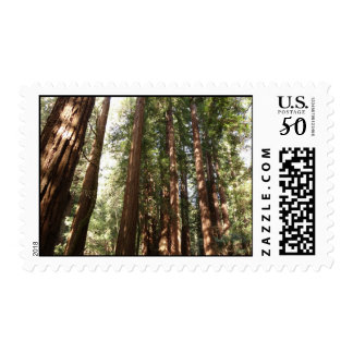 Up to Redwoods II at Muir Woods National Monument Postage