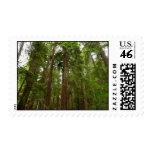 Up to Redwoods Stamp