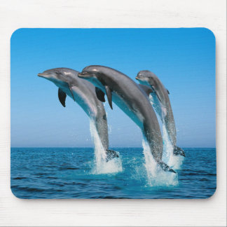 Up Up Up Dolphins Mouse Pad