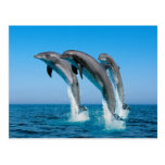 Up Up Up Dolphins Post Cards