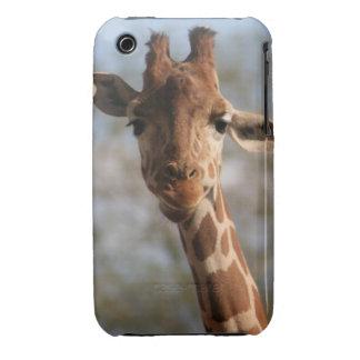 Upclose Giraffe- iPhone 3g/3s case