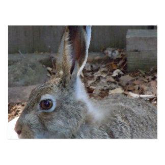 Upclose Rabbit Postcard