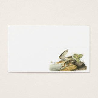 Upland Sandpiper by Audubon Business Card