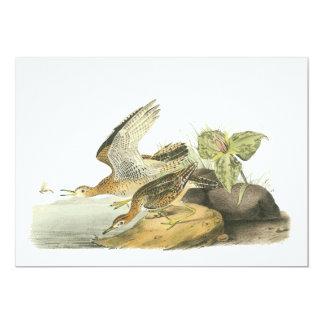 Upland Sandpiper, John Audubon Card