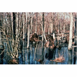 Upland Wood Swamp Cut Out