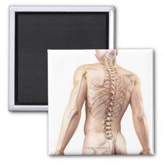 Upper Body Bones 2 2 Inch Square Magnet