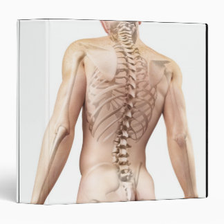 Upper Body Bones 2 Binder