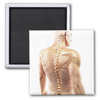 Upper Body Bones 2 Inch Square Magnet