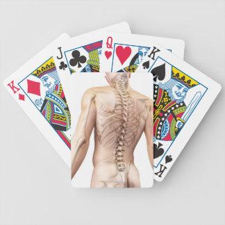 Upper Body Bones 2 Card Deck