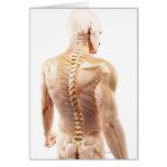 Upper Body Bones Greeting Card