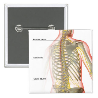 Upper Body Nerve Supply Pinback Button