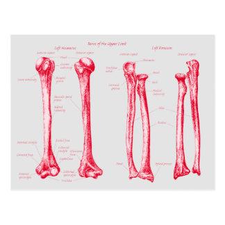 Upper Limb Red Postcard