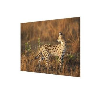 Upper Mara, Masai Mara Game Reserve, Kenya, Canvas Print