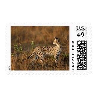 Upper Mara, Masai Mara Game Reserve, Kenya, Postage