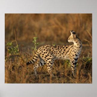 Upper Mara, Masai Mara Game Reserve, Kenya, Print