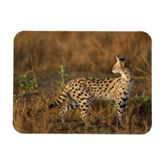 Upper Mara, Masai Mara Game Reserve, Kenya, Rectangular Photo Magnet