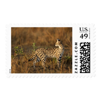 Upper Mara, Masai Mara Game Reserve, Kenya, Stamps