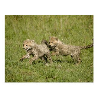 Upper Mara, Masai Mara Game Reserve, Postcard