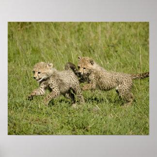Upper Mara, Masai Mara Game Reserve, Poster