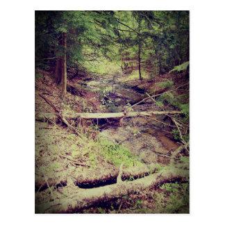 Upper Peninsula Creek Postcard