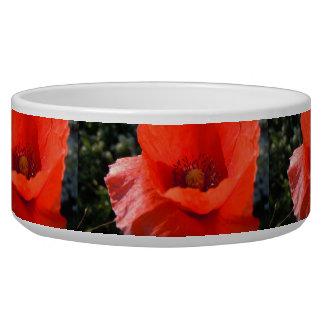 Upright Poppy Bowl
