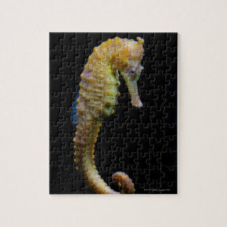upright swimmerequine shapeprehensile taillong jigsaw puzzle