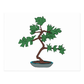 Upright young bonsai graphic postcard