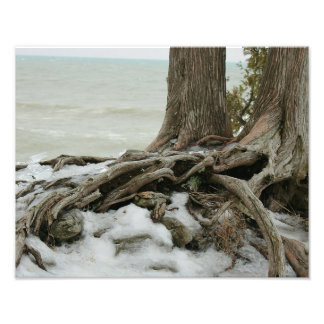 Uprooted in Winter Photo - Tree Roots in Ice