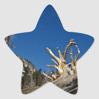 UPROOTED OLD TREE WITH BLUE SKY STAR STICKER