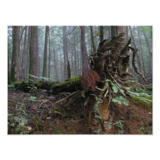 Uprooted Tree in the Mountains Poster