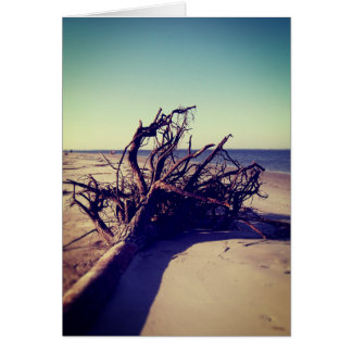 Uprooted Tree On The Beach Card