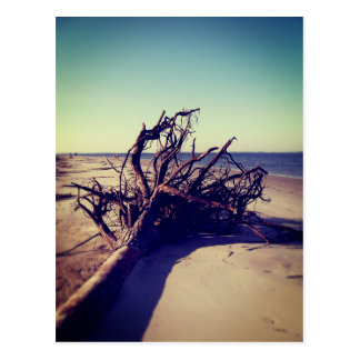 Uprooted Tree On The Beach Postcard