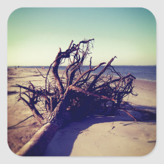 Uprooted Tree On The Beach Square Sticker