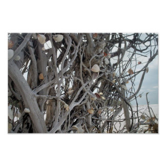 Uprooted with Shells Poster