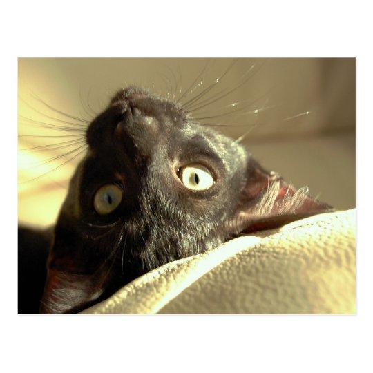 Upside down cat! postcard